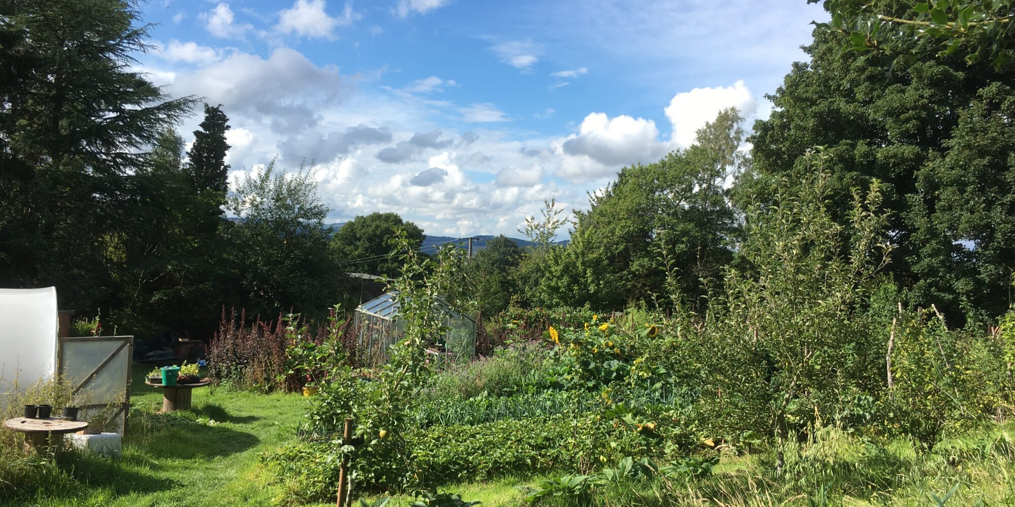 A view of the farm in summer with blue skies, green trees and vegetable patches